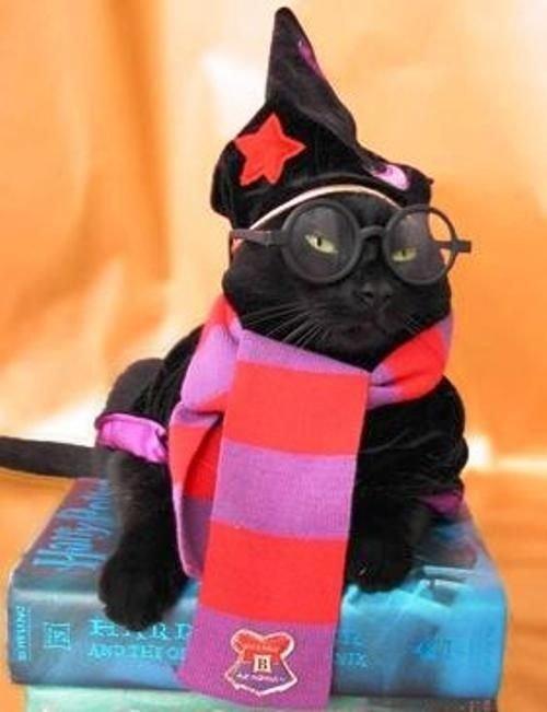 Kitty Potter