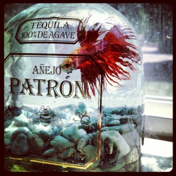 Spirit Bottle Aquarium