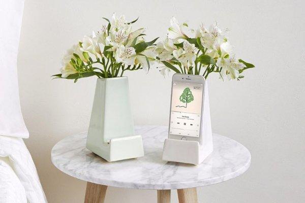 White, Vase, Flower, Flowerpot, Cut flowers,