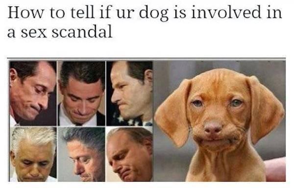Face, Dog, Canidae, Vizsla, Facial expression,