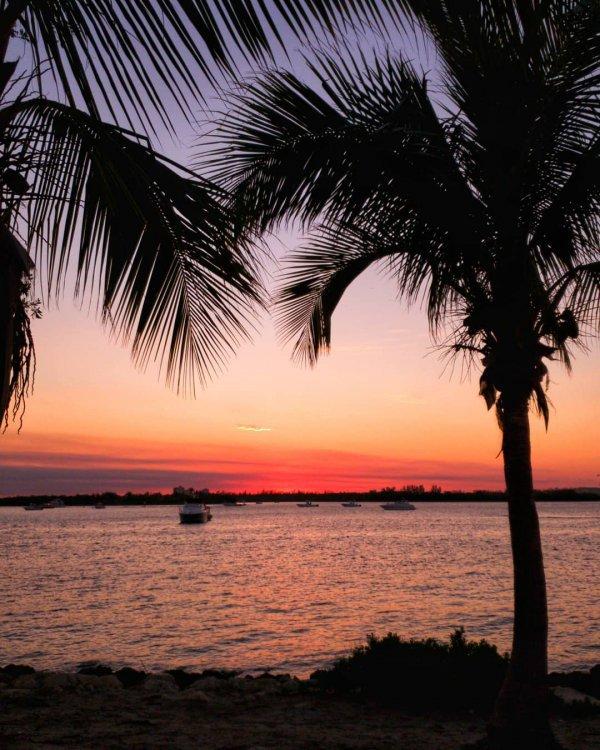 sky, sunset, sea, palm tree, arecales,