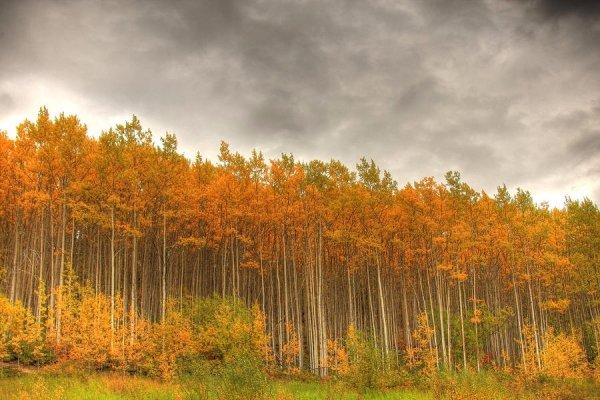 Poplar Forests – Oregon, USA