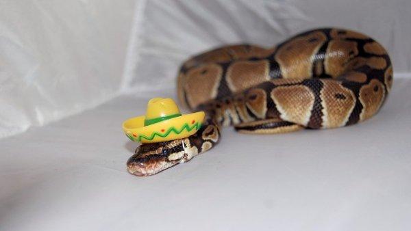 Snake Sombrero