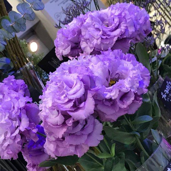 blue, flower, plant, purple, violet,