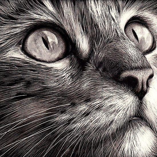 Here, Kitty Kitty