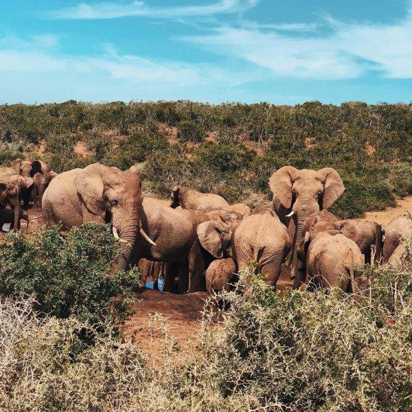 wildlife, elephants and mammoths, ecosystem, terrestrial animal, wilderness,