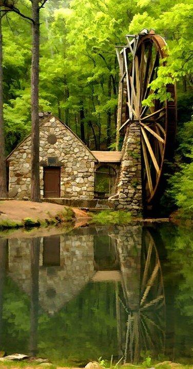 nature,green,tree,wilderness,botany,
