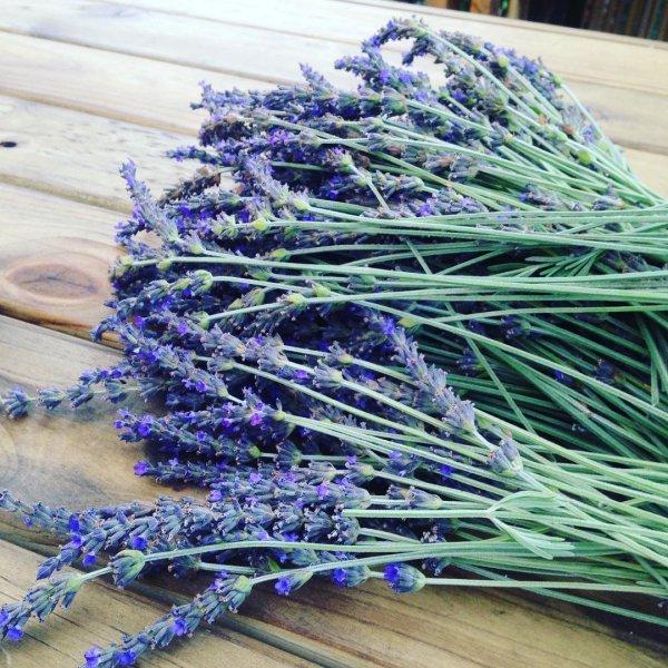 lavender, purple, lavender, english lavender,
