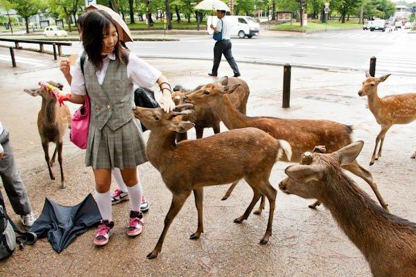 Temples and Deer, Nara