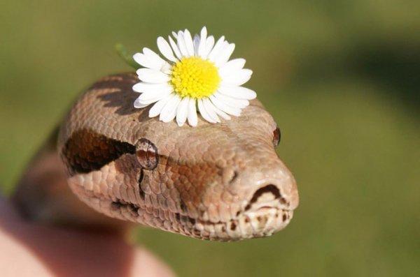 Boho Snake