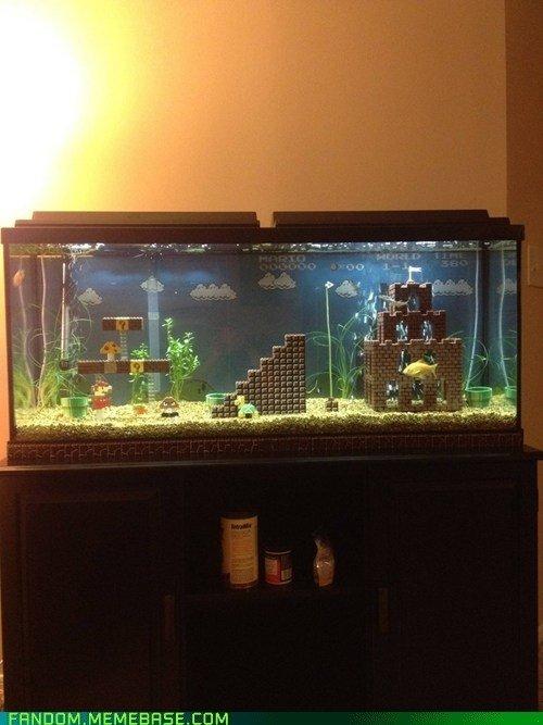 aquarium,display device,freshwater aquarium,screenshot,FANDOM,