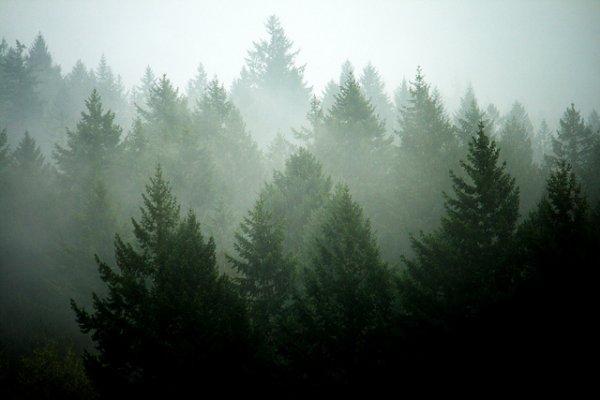 Pine = Christmas