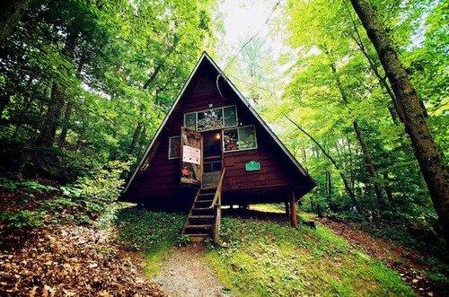 habitat,nature,wilderness,natural environment,woodland,