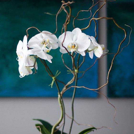 white, flower, still life photography, plant, flora,