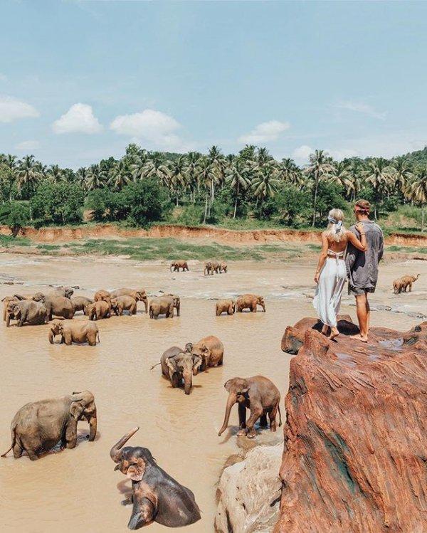 wildlife, adventure, safari, working animal,