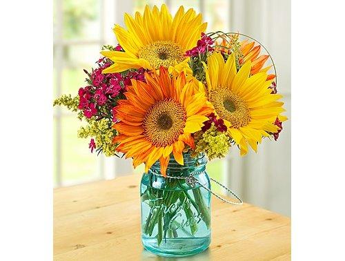 flower,plant,gerbera,flower arranging,yellow,