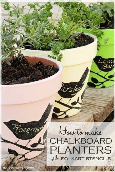 Carat,plant,soil,herb,flowerpot,
