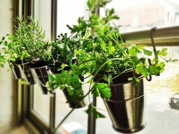 plant,herb,flower,land plant,floristry,