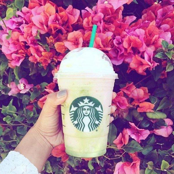 Starbucks, flower, pink, plant, hydrangeaceae,