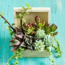 flower arranging,flower,floristry,plant,flower bouquet,