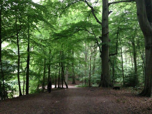 Whippendell Woods, England