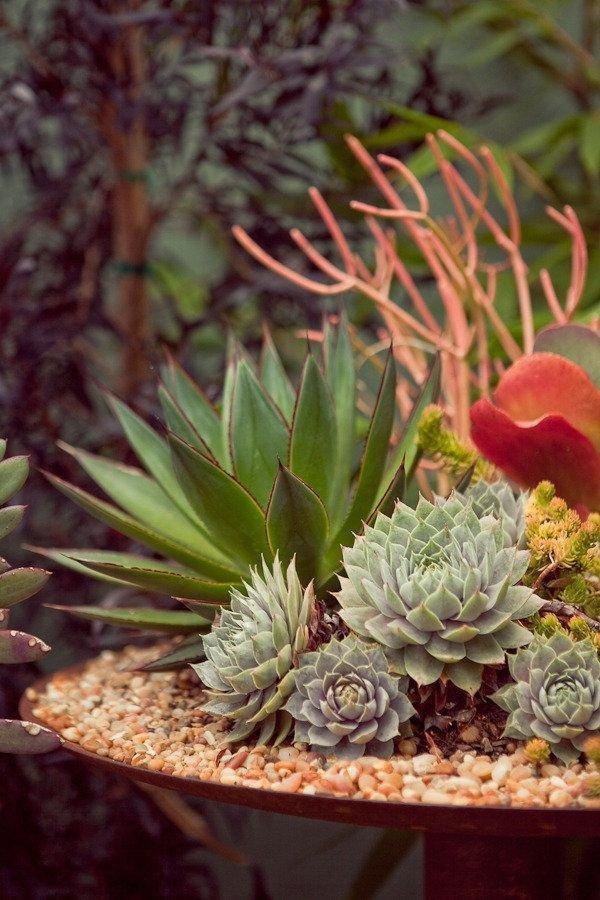 plant,flora,botany,flower,land plant,