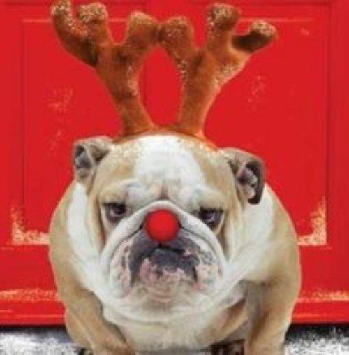 dog, dog like mammal, dog breed, snout, puppy love,