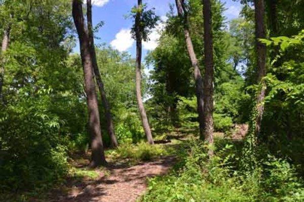 Hallett Nature Sanctuary