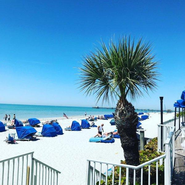 sea, arecales, palm tree, sky, tree,