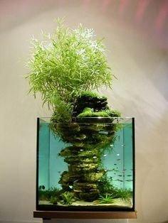 tree,green,plant,botany,bonsai,