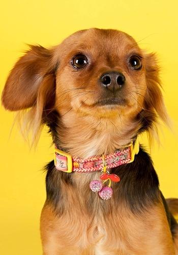 Bling Cherry Dog Collar