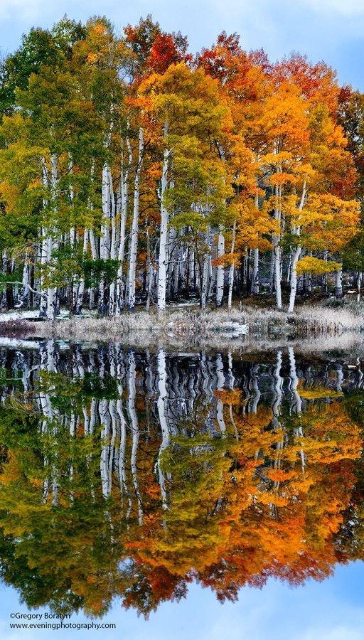 reflection,tree,wilderness,autumn,season,