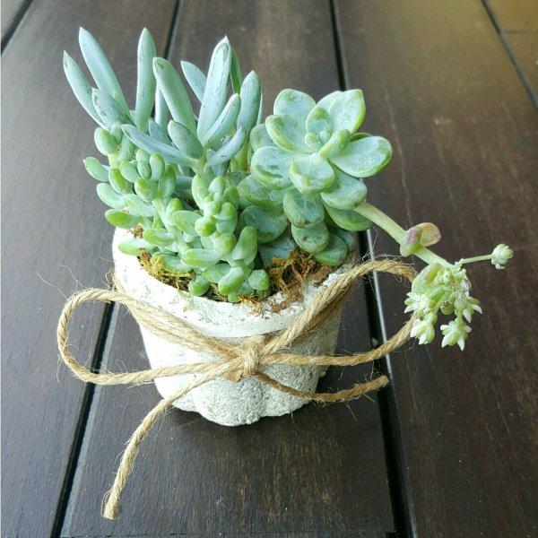 plant, green, flower, flora, botany,