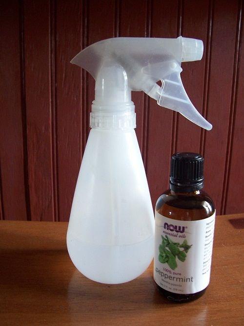 bottle,product,glass bottle,drinkware,nour,