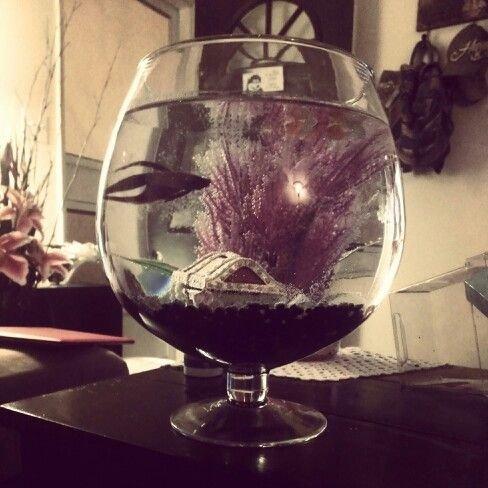 wine glass,stemware,glass,lighting,wine,