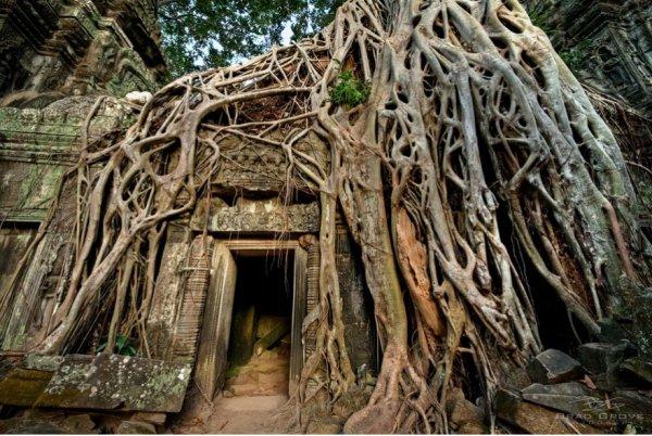 Ta Prohm, hut, ruins, wood, jungle,