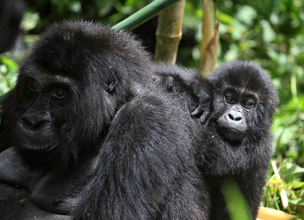 Kahuzi-Biega National Park, Democratic Republic of the Congo