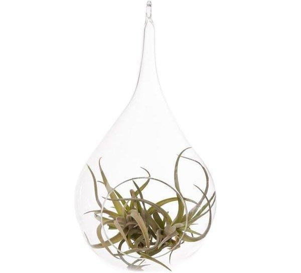 Air Plant Tillandsia Bromeliads Kit Teardrop Terrarium with Pebbles and Moss