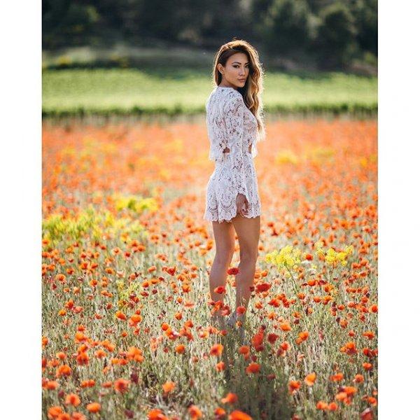 flower, plant, season, meadow, poppy,