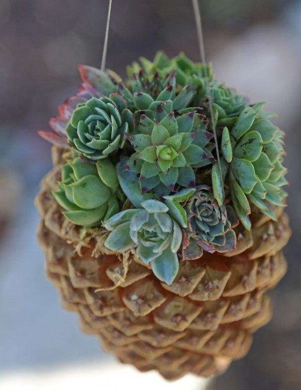DIY Hanging Pine Cone Succulent Planter