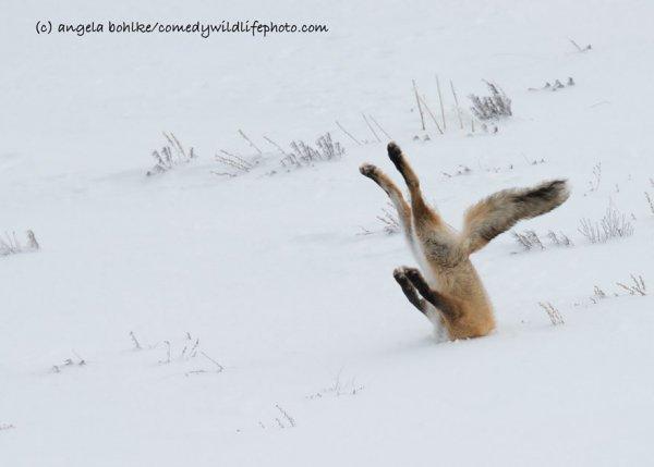 vertebrate, bird, fauna, winter, snow,