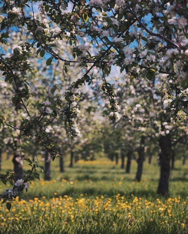 blossom, produce, plant, flower, spring,