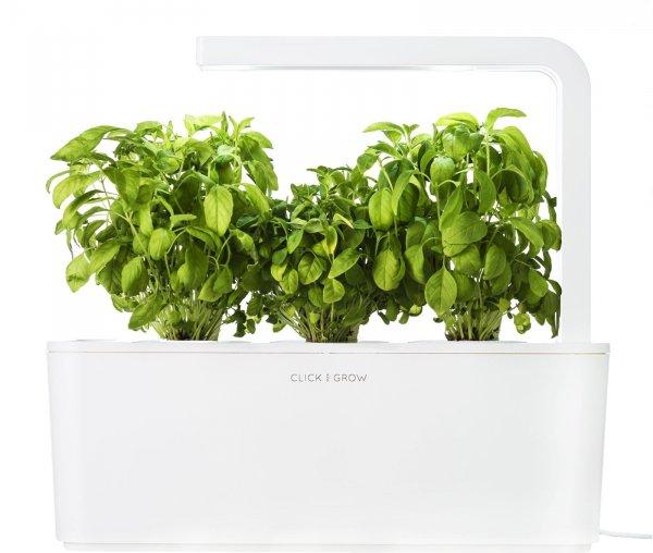 plant, produce, vegetable, herb, food,