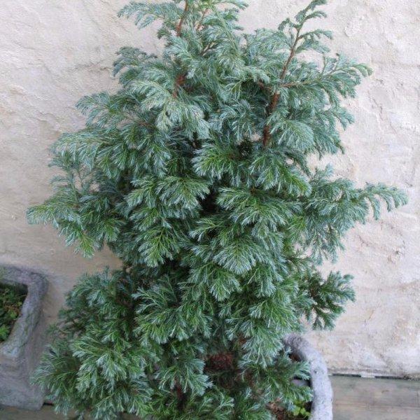 tree, plant, botany, land plant, woody plant,