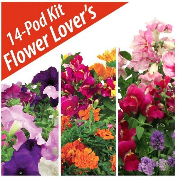 flower, plant, flora, land plant, petal,