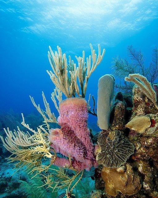 Roatán Coral Reef