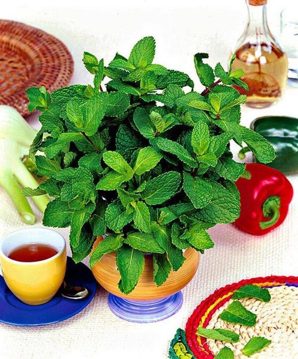 Food, Herb, Ingredient, Mint, Plant,