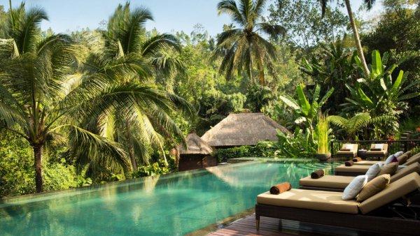 swimming pool, resort, estate, jungle, arecales,
