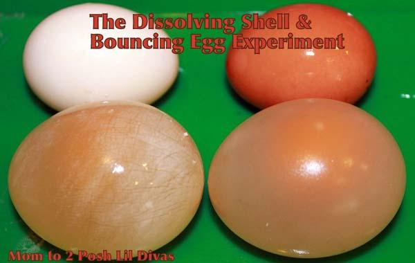 Dissolving Egg Shell