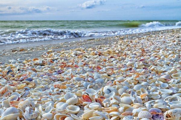 Best US Place for Shelling: Sanibel Island, Florida